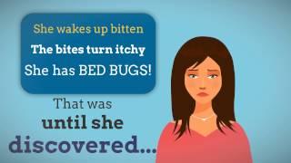 Bed Bugs Steamer in Boston