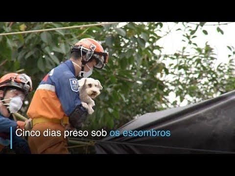 afpbr: Cãozinho sobreviveu 5 dias sob escombros no México