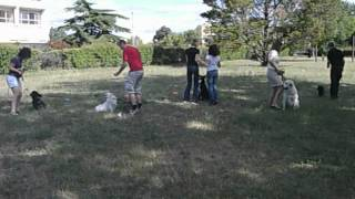 cours collectif dogspirit education canine montpellier
