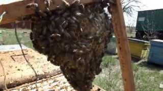 Действие обогрева на пчелиные семьи весной.