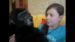 The youngest ventriloquist with her friend Gavin the Gorilla singing Banana Boat Thumbnail