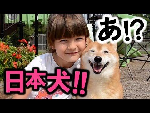 ある光景に外国人コメント1万超!!日本固有の犬種が世界中で大ブーム!!【海外の反応】