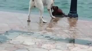 Животные помогают друг другу!