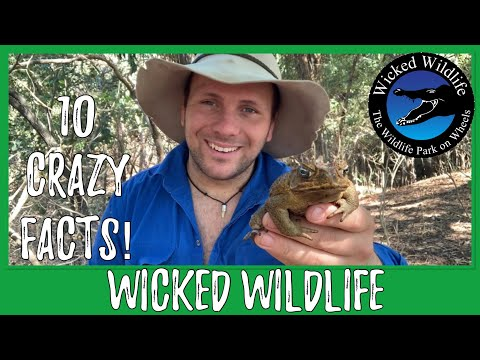 10 Crazy Cane Toad Facts!