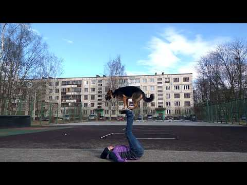 Интересные трюки собаки. Dog circus trick's
