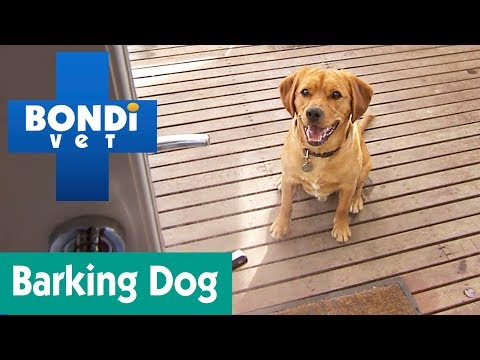 How To Stop Your Dog From Barking? | Ask Bondi Vet