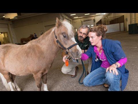 RamChat: Applying to CSU's Veterinary Program
