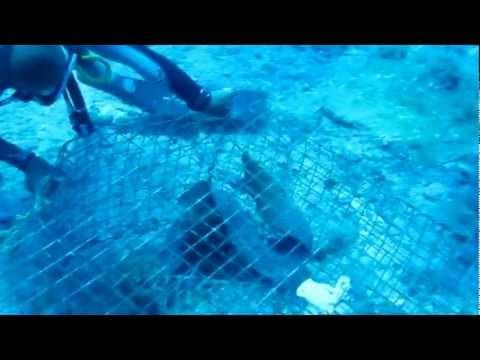 ELI Africa Thanksgiving Eel Rescue