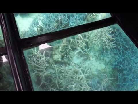 Glass Bottom Boat in New Caledonia