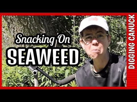 SEAWEED & HORSESHOES DON'T MIX Metal Detecting Canada
