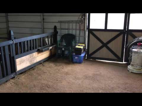 Pygmy Goat Barn Tour