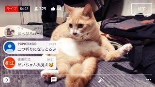 Youtubeライブ中に♂猫だいずに笑いの神様降臨!お腹おっぴろげて、 おや...