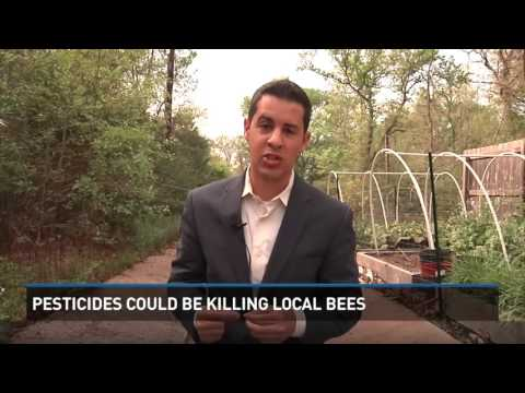 Pesticides could be killing local bees