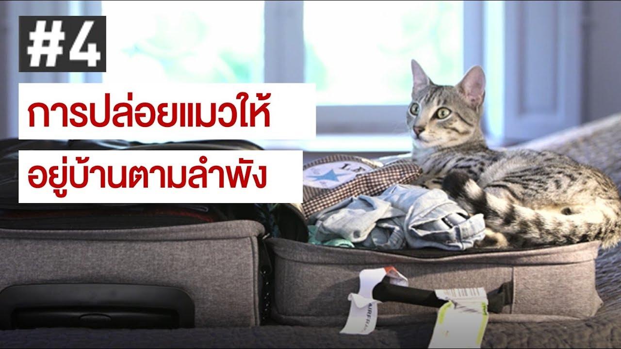 การปล่อยให้แมวอยู่บ้านลำพัง