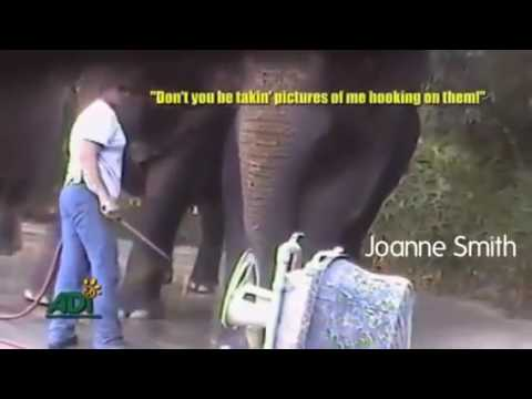 Animal Trainers Abuse At Have Trunk Will Travel