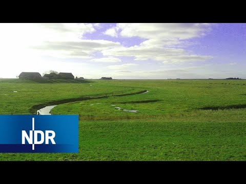 Leben auf der Hallig | 7 Tage | NDR