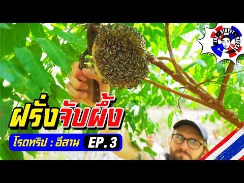 Road Trip Isaan Ep.3  Honeycomb Hunying (ตีรังผึ้งมิ้ม)