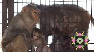 ИндоЭтноЭксп №18 Джайпур, храм обезьян, Хава-Махал