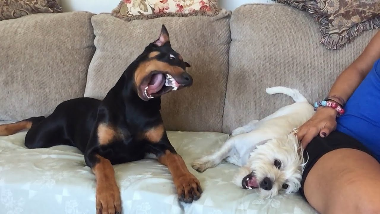 How To Make Your Dog Attack