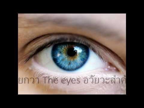 นัยน์ตาและการมองเห็น_สส