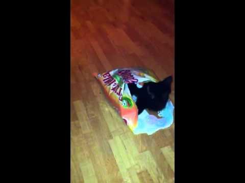 Kat in de zak :