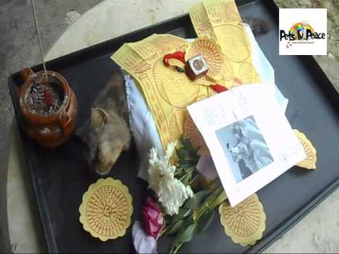 Grey Cat Tiger 20150202 pets in peace malaysia pets memorial  funeral