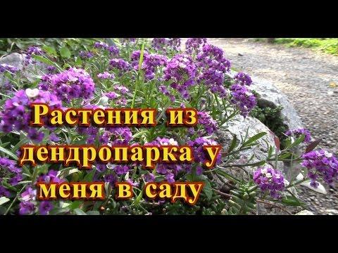 МИР ЦВЕТОВ Журавлевой Нэлли - Мир цветов Журавлевой Нэлли