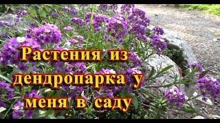 Растения из дендропарка. Спешу посадить!(Дендропарк осенью выглядит прекрасно! https://www.youtube.com/watch?v=lZMr1TTzv_c Но кроме красоты этого парка, там можно..., 2016-10-03T13:36:34.000Z)