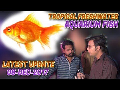 Tropical Freshwater Aquarium Fish Latest Update 08-Dec-2017 (Jamshed Asmi Informative Channel )