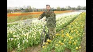 Basikal - Bicycles - Fietsen - Les Bicyclettes - Cycling in Springtime in Holland - Dutch way.