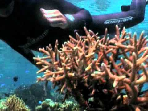 Jaeger LeCoultre commits to Marine World Heritage