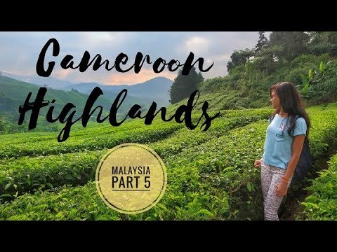 Cameroon Highlands - Malaysia Part 5 - Tea Process - Mossy Forest - Butterfly Garden - Indian Couple