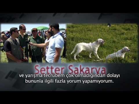 Setter Sakarya TOP ENERGY DOG FOOD