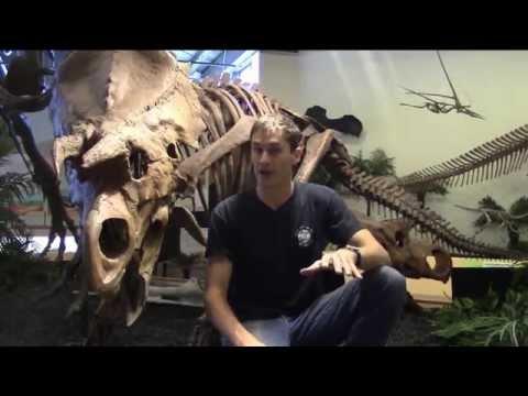 #23 Ava: the New Ceratopsian