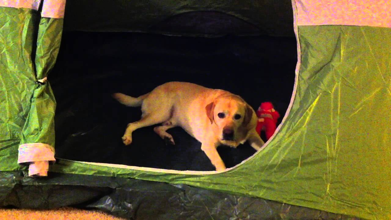 Dog in Tent Wagging Tail ADORABLE & Dog in Tent Wagging Tail ADORABLE - YouTube