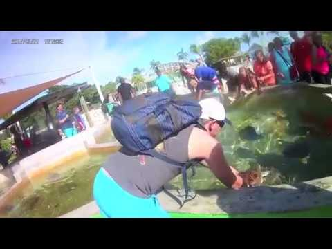 Grand Cayman Vacation - Stingray City - Cayman Turtle Centre - Reef Snorkeling