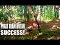 Berhasil Pikat Ayam Hutan Gak Nuggu Pake Lama  Mp3 - Mp4 Download
