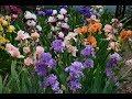 Ирисовый сад Екатерины и Александра Монако. Music Sergey Chekalin. Very beautiful music!