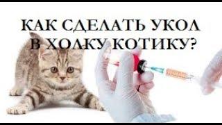 Как сделать БЕЗБОЛЕЗНЕННО укол в холку коту