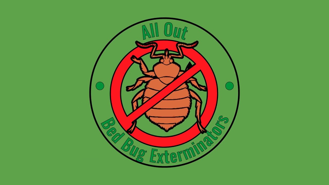 Bed Bug Exterminators Nyc All Out Bed Bug Exterminators Youtube