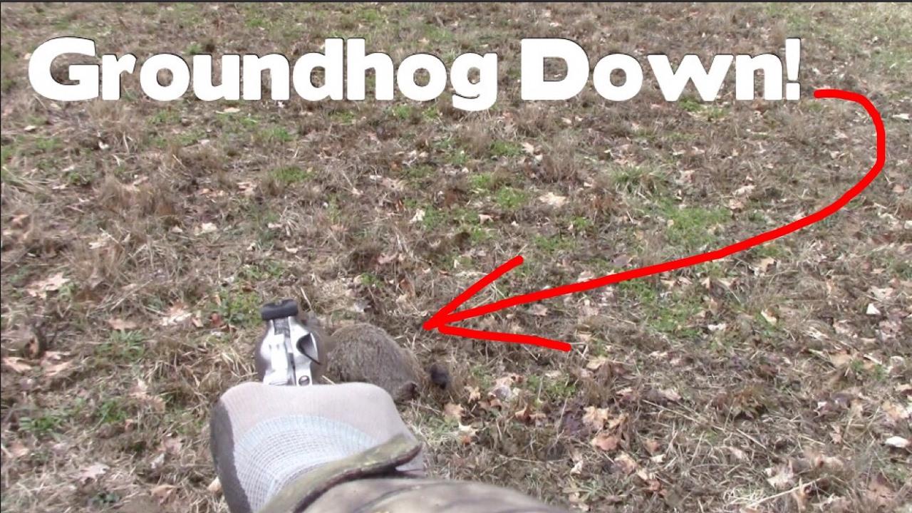 Groundhog Day 2017 Groundhog Kill Vlog 006