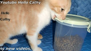 Can kittens get the cat food?Funny video!