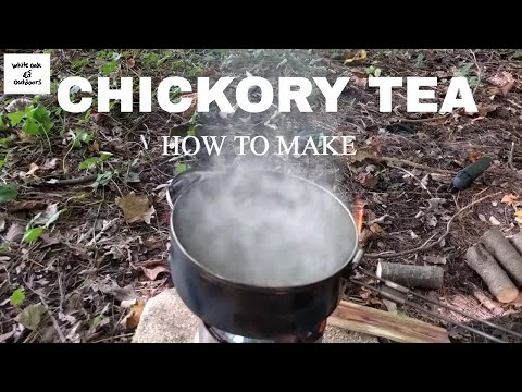 How to make Chicory Tea