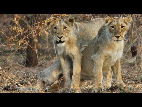 Trip to Gir Forest Gujarat 25 December 2016