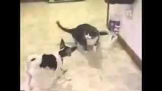 kedi köpek kavgası bir alem yaaa