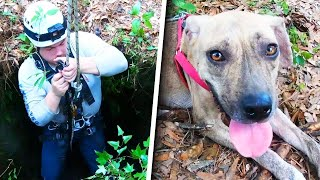 rescuers-use-rope-to-pull-stranded-dog-to-safety