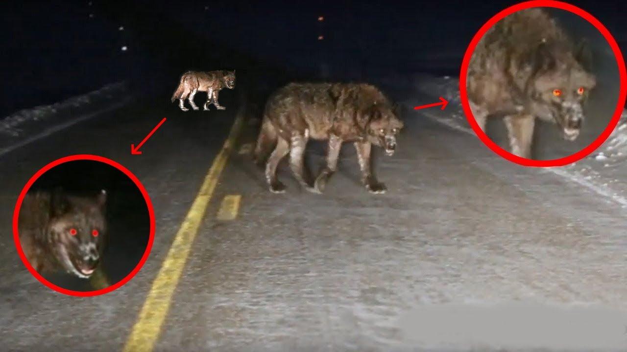 Самые Невероятные Встречи с Дикими Животными на Дороге (2021)