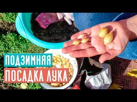 ОЗИМЫЙ ЛУК 🌱 Полная инструкция по посадке / Садовый гид