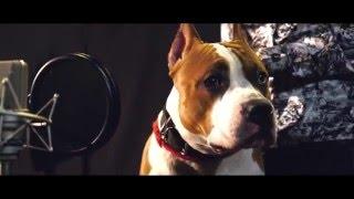ROB - Запись собаки на студии