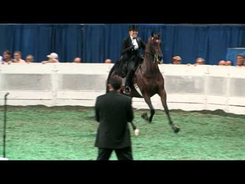2009 World's Championship Horse Show: Three-Gaited...